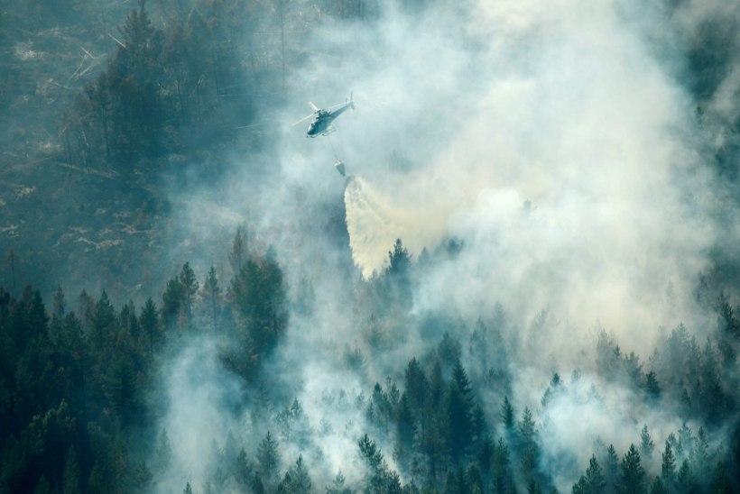 Rootsi vaevleb metsapõlengutes: kõikjalt Euroopast tõtatakse appi