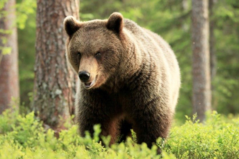 Šokk Venemaal: karud kaevasid surnuaial üles vähemalt 20 kadunukest