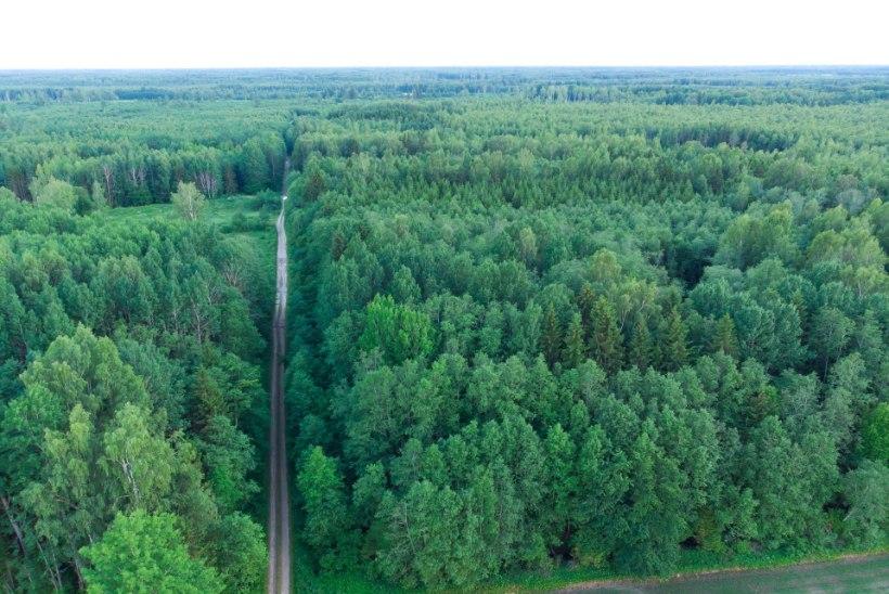 EMA kahtlustab mastaapset metsapettust Valgamaal