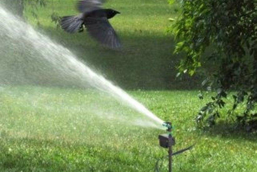 Abi aiapidajatele: kuidas peletada marjamaiaid linde?