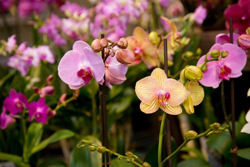 TERVISEAMET HOIATAB: mürgised marjad ja taimed ohustavad väikelapsi