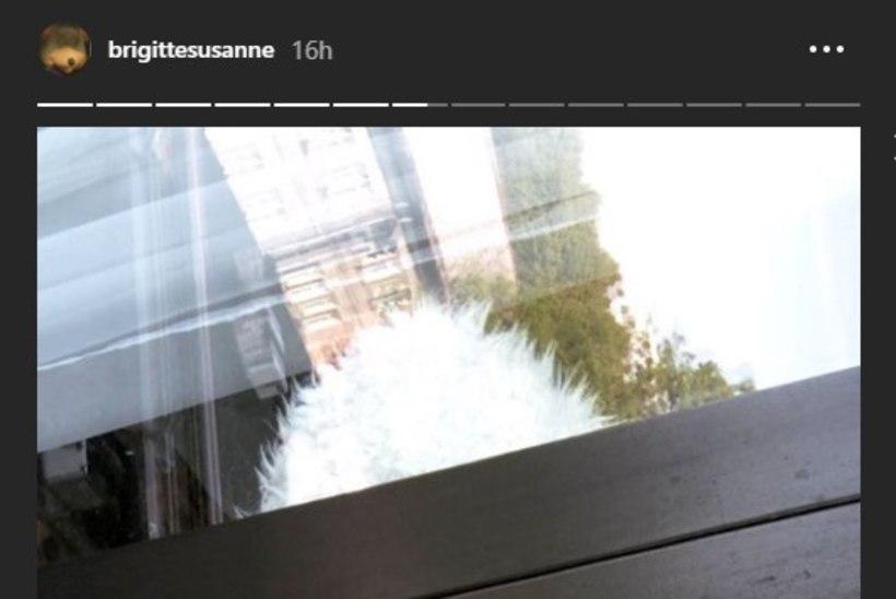 FOTOD | Noored ja armunud: Brigitte Susanne Hunt tutvustab uut peikat