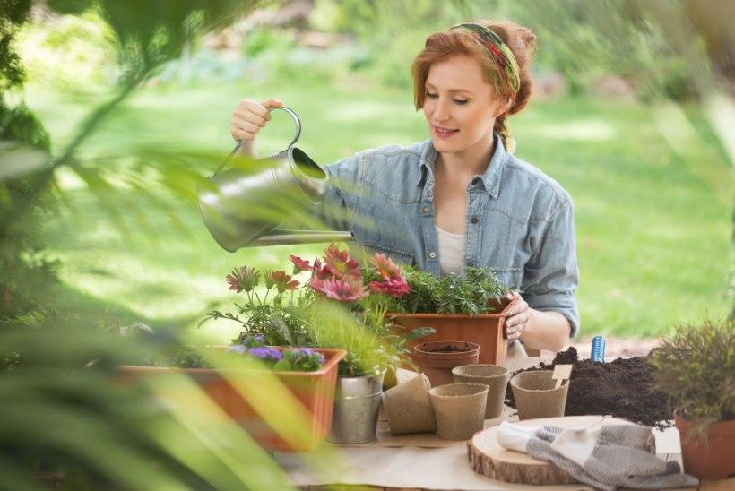3 nutikat nippi, kuidas taimi õigesti kasta!