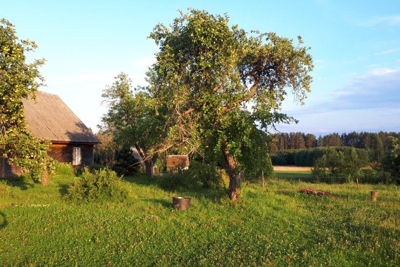 Noor naine kolis hobuste nimel Tallinnast maale metsade vahele: siin on hingematvalt ilus!