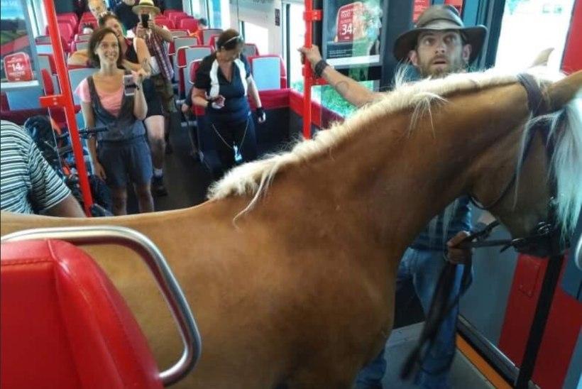 FOTOUUDIS | Mägedest ja obesega: Austria mees läks suksuga rongi peale