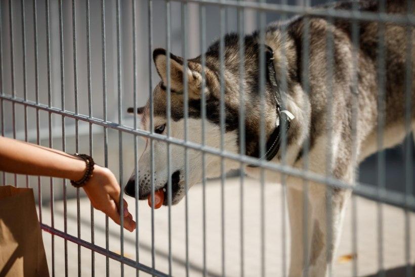 ÕL VIDEO JA GALERII | Tallinna loomade varjupaik tähistas laulu ja tralliga oma teist sünnipäeva