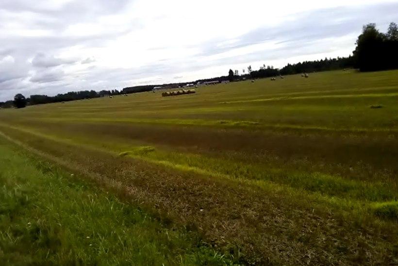 VIDEO   Lugeja pahandab: põllumehed ei oska enam vilja koristada!