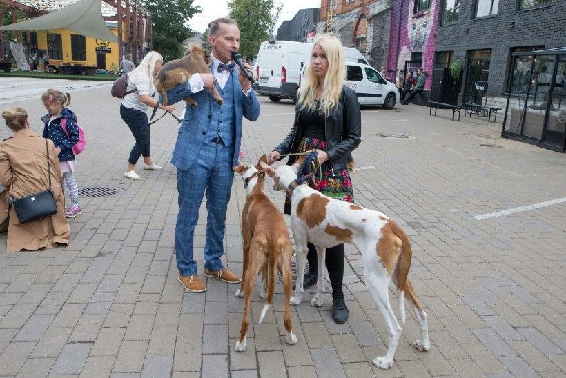 ÕL VIDEO   Eesti populaarseimate Insta-koerte omanik: konto haldamine on kui täiskohaga töö