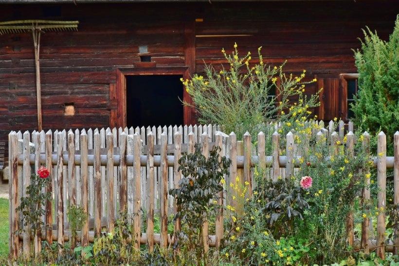Sügistööd aias: lillepeenar külmakindlaks!
