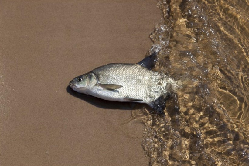 Põua tagajärjel on osa vee-elustiku hukkumine paratamatu