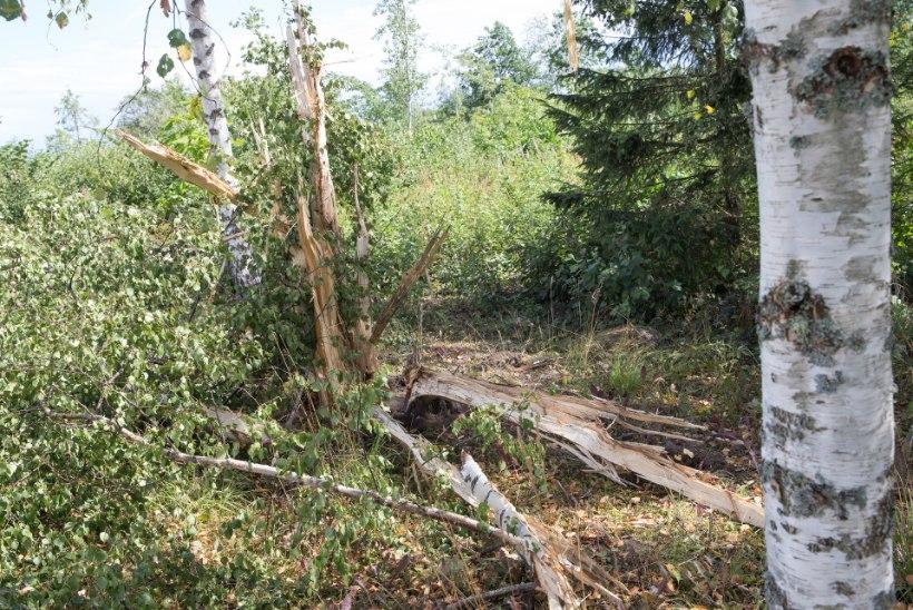 ÄIKESEOHVER: pauk oli kõrvulukustav, kuigi välk tabas isegi mitte maja, vaid teisel pool põldu asunud puud!