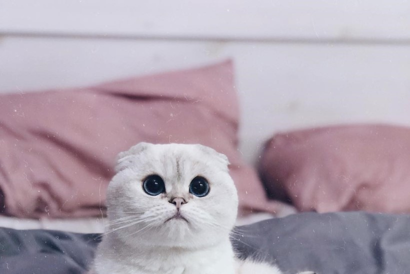SUUR GALERII | Eesti kasside koorekiht ehk Vaata, millised kiisud on meie seltskonnastaaridel!