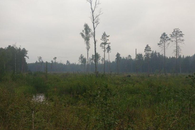 GALERII ja VIDEO | Läsnal põleb kaitseväe polügoonil maastik
