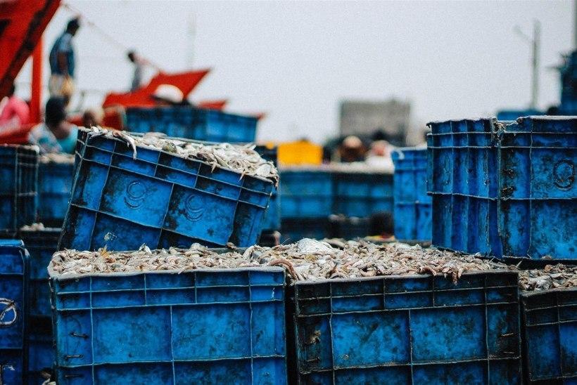 Hiina Rahvavabariik mõjutab kalandust järgmised kümme aastat