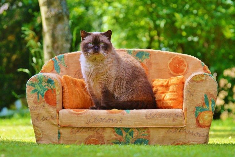 KUIDAS ELADA ÕNNELIKUMALT? 13 elutõde, mida õppida kassilt