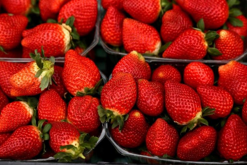 Austraalias kasvatatud maasikatest on leitud õmblusnõelu