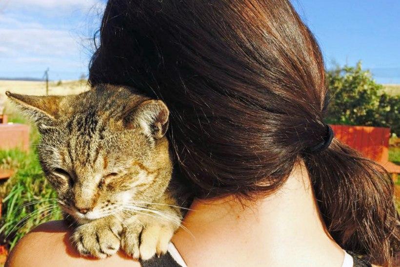 KASSIKUURORT: Hawaiil hoolitsetakse hulkuvate kasside eest luksuslikult