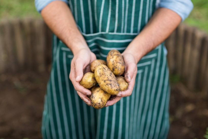 Eakad sugulased käivad pinda: aias uputab viljadest, tule ometi appi!