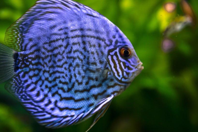 LEMMIK   Põhjalik ülevaade, mida peaksid teadma enne kui tood koju kalaakvaariumi