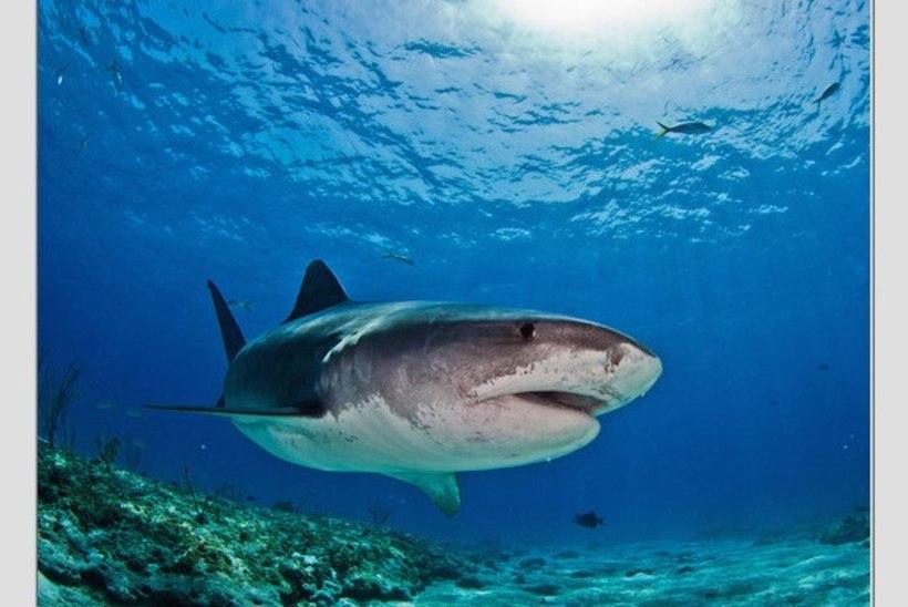 Tokyo OMi eelluure: Rammo kohtas haid ja tõi eestlastele häid uudiseid