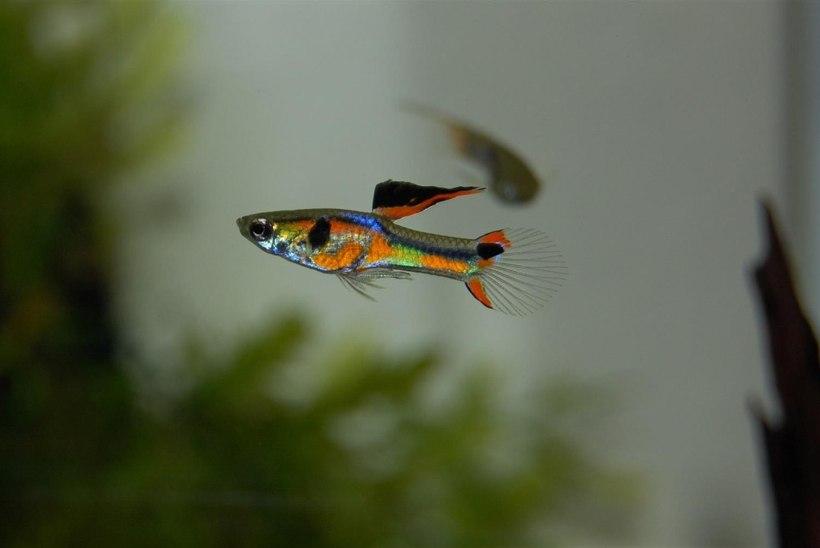 Valgussaaste teeb kalad julgeks