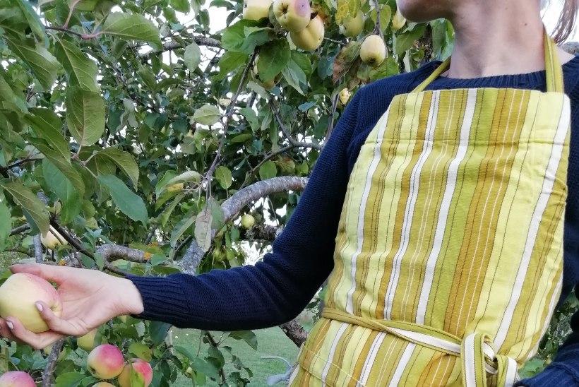 BLOGI | Tee ise aedniku superpõll, kuhu saad korjata kõik aiasaadused
