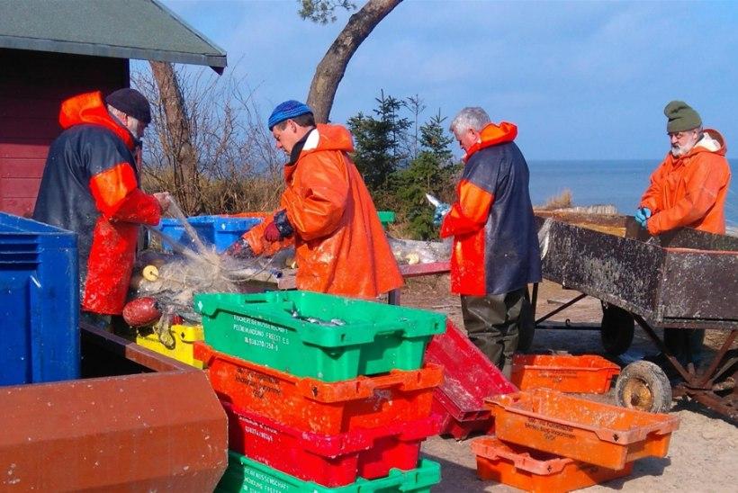 sügisene kala jõudis Pärnu randa