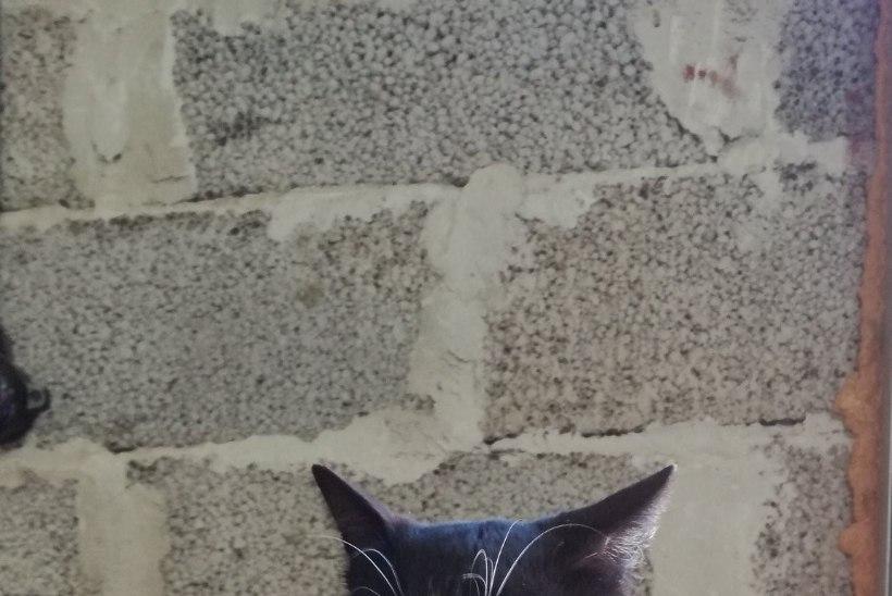 ÕHKRELVAD LOA ALLA? Roela päästekomando kassikest ähvardab julmuri kuulide tõttu halvatus