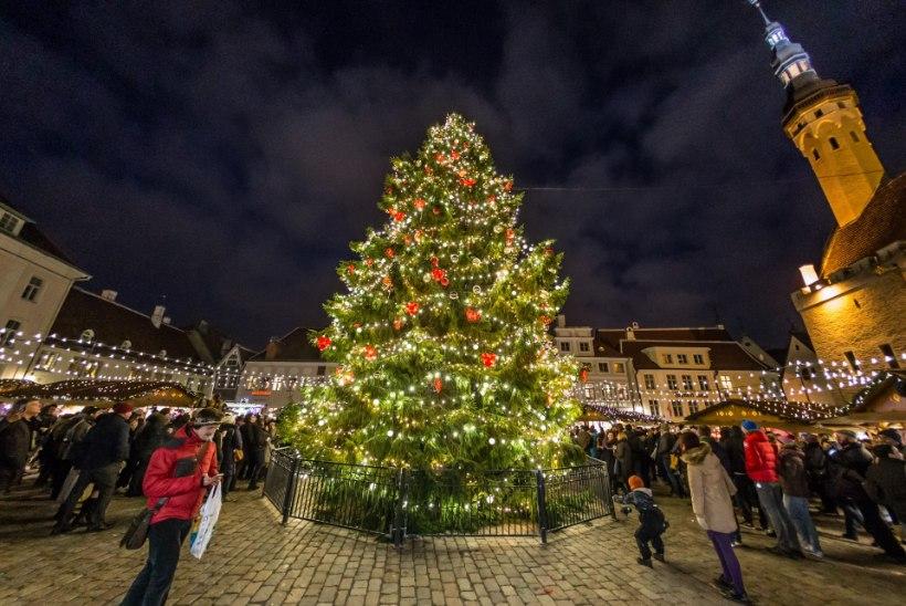 AITA LEIDA! Tallinn otsib jõulukuuske