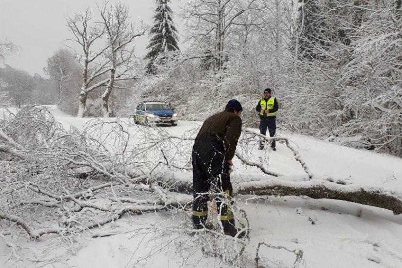 FOTOD   Olge teedel ettevaatlikud: tugev tuul murrab puid