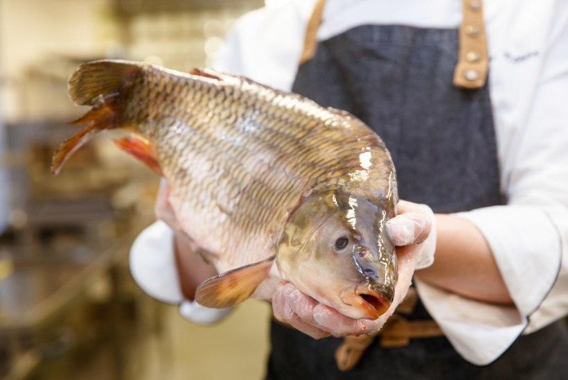 Kalakolmapäev: mida teha valgest kalast?