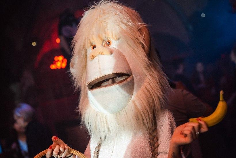PEOGALERII | Teatris pidutsesid sead ja kiisud, ülejäänud pandi puuri!