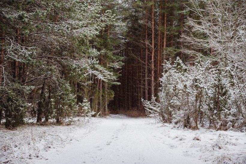 Metsa eksinud lapsed pääsesid tänu üheksa-aastasele poisile
