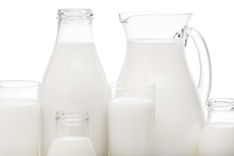 HEAD PIIMAPÄEVA! Millist piima teie joote - looma- või taimepiima?