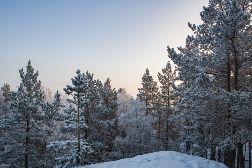 Заблудившихся на болоте в Южной Эстонии семерых детей спасли благодаря смелости 9-летнего мальчика