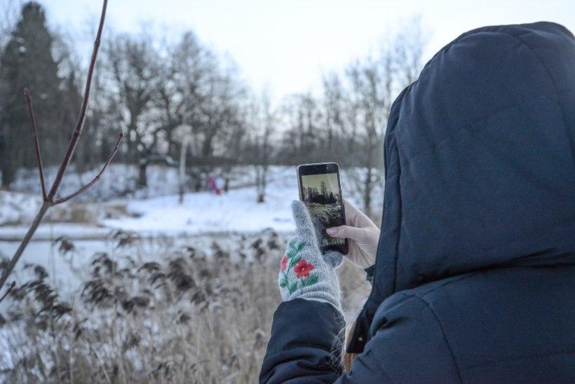 GALERII | Vana-Vigala jääratas külmade tõttu enam ei keerle, kuid on ikkagi turistimagnet