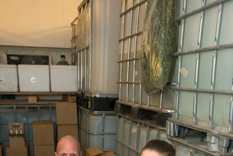 KÜLAS EESTI TALUDES | Noor talupere turustas möödunud talvega 20 tonni kasemahla