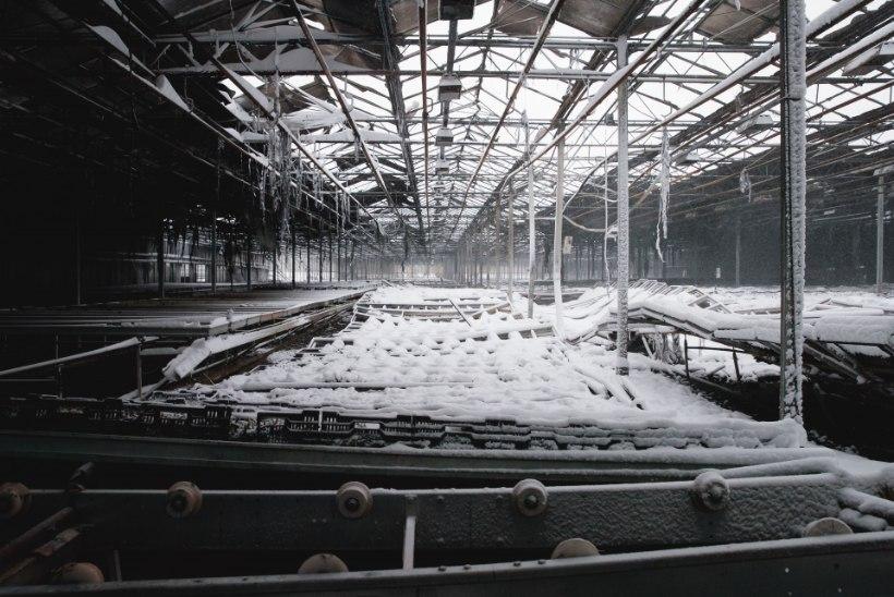 Siseminister peab selgitama Nurmiko aiandi hävingut