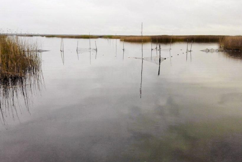 KALALE / Küsimused ja vastused kalavarude jätkusuutlikumaks majandamiseks