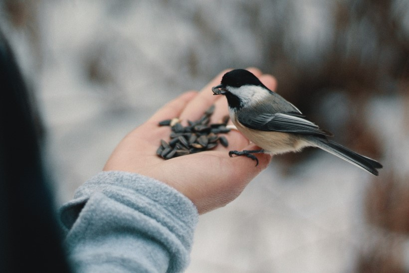 Lindude toitmine: mis sobib neile söögiks?