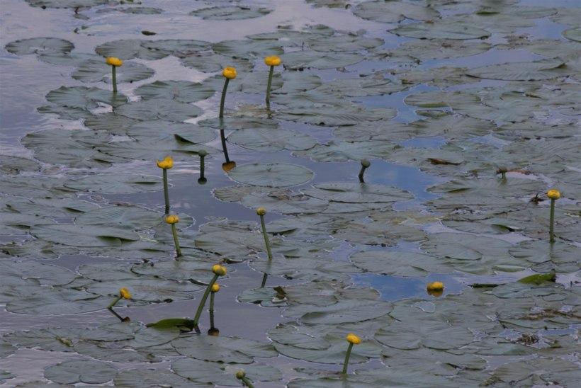 Üheksa veekogu koelmualad saavad peagi puhtaks