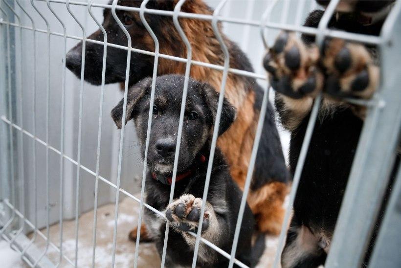 ÕL VIDEO JA FOTOD | Kuidas algas aasta loomade varjupaigas?