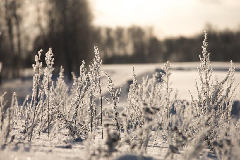 Eelolev öö tõotab tulla selle aasta kõige külmem