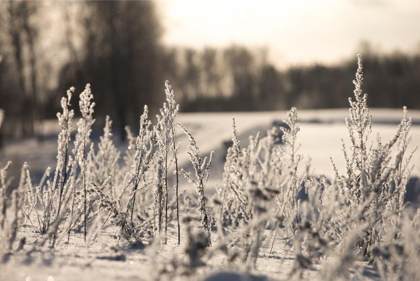 KÜLMAGALERII | Hommikul sündis külmarekord, Metsavana ennustab tuisku