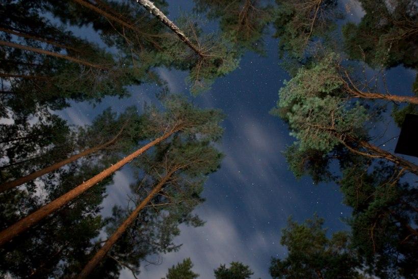 PÜÜNISED ON VÄLJA HEIDETUD: erakonnad lubavad valijatele maapealset paradiisi