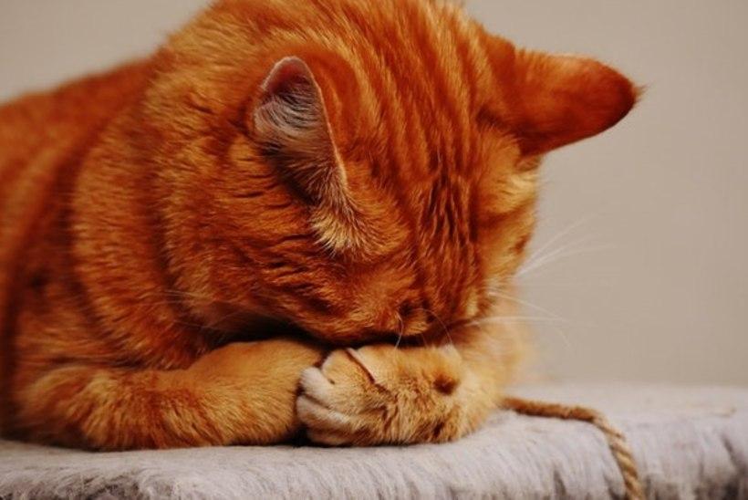 Kuidas ära tunda, et loomal on stress?