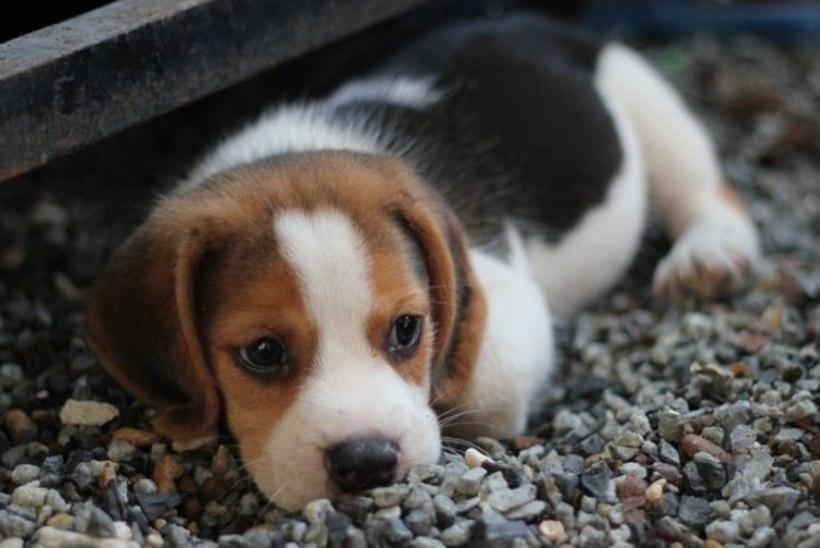 10 põhjust, miks looma võib vaevata stress