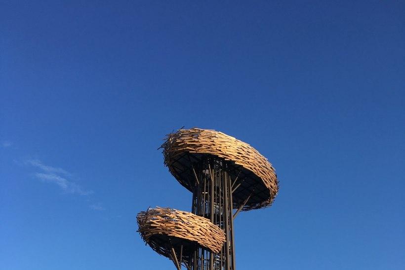 Milliseid paiku külastada Eestis suvel ja talvel?