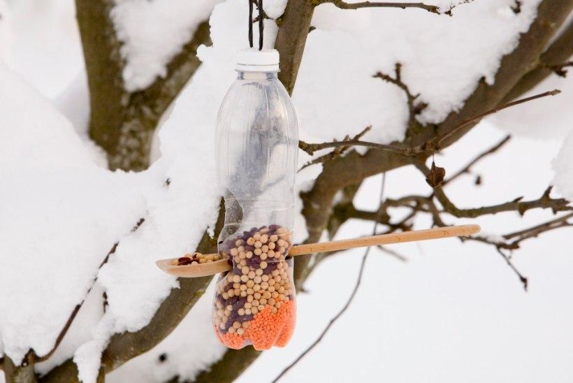 Meisterda koos lapsega lindudele toidulaud