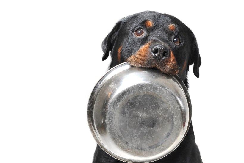 Milliseid toite ei tohi koerale anda?